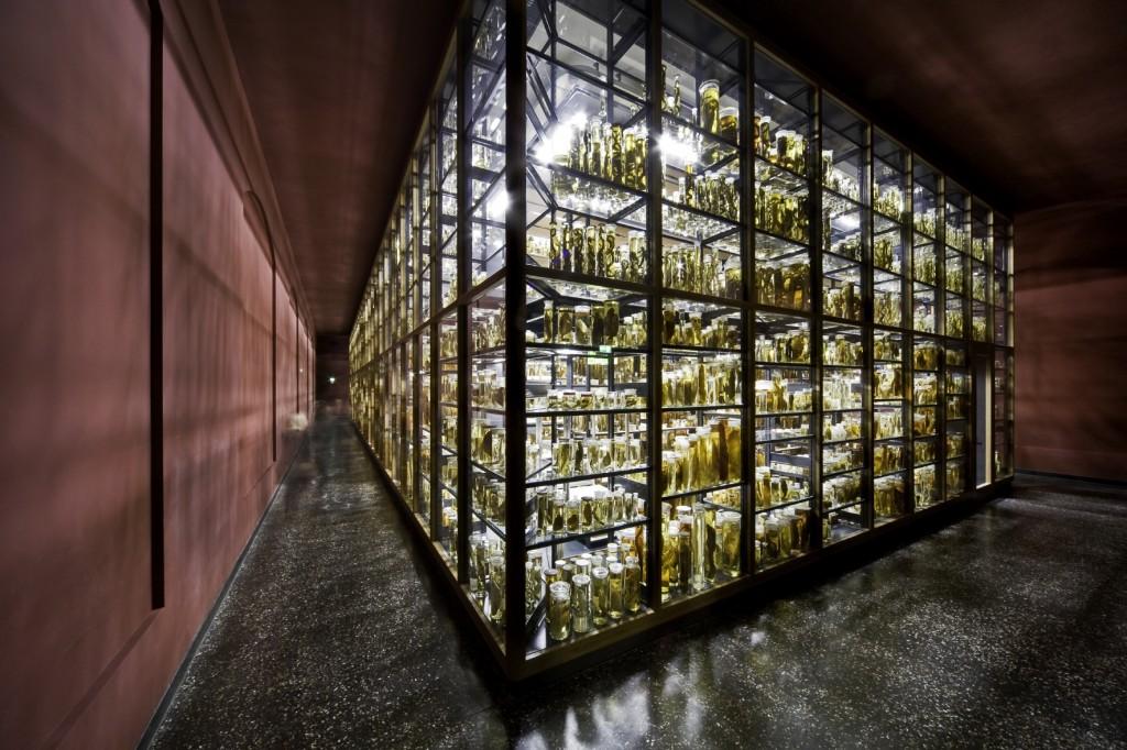 Rund eine Million Objekte der zoologischen Sammlungen untergebracht: Fische, Spinnen, Krebse, Amphibien und Säugetiere lagern in 276.000 Gläsern mit 81.880 Litern Alkohol in dieser modernen Forschungssammlung.